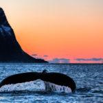 Whalewatching-1024x526